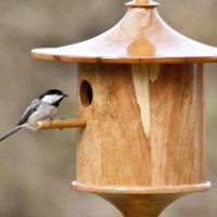 "Beech ""Cottage"" style house with Carolina Chickadee."