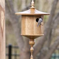 "White Oak ""Cottage"" style with Carolina Chickadee."